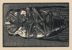 "Cicada no. I. wood engraving. 2015. 2"" x 3"""
