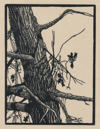 "Lone Oak. wood engraving. 2017. 4"" x 3"""