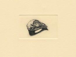 "Bird Skull. copperplate engraving. 2018. 1"" x 2"""