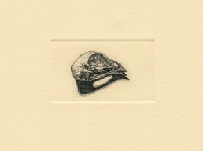 "Bird Skull. copperplate engraving. 2018. 1"" x 2"""