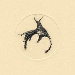"Fallen Leaf no. VI. copperplate engraving. 2018. 3"" diameter"