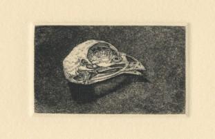 """Bird Skull variation no. I. engraving and aquatint. 2018. 1"""" x 2"""""""