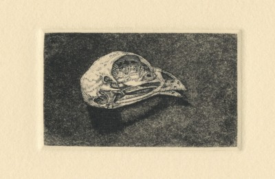 "Bird Skull variation no. I. engraving and aquatint. 2018. 1"" x 2"""