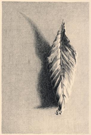 "Fallen Leaf no. VII. lithograph. 6"" x 4"". 2019"