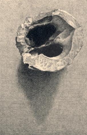 """Walnut no. VI. lithograph. 6"""" x 4"""". 2019"""