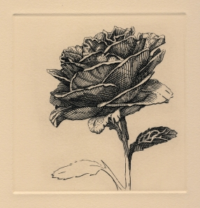 Rose no. I. engraving. 4 x 4 inches. 2020.