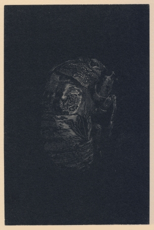 Cicada no. II. wood engraving. 6x4 in. 2019.